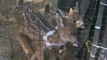 Leave baby deer alone, rescue centre pleads