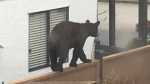 Reports of nuisance bears nearly triple the norm