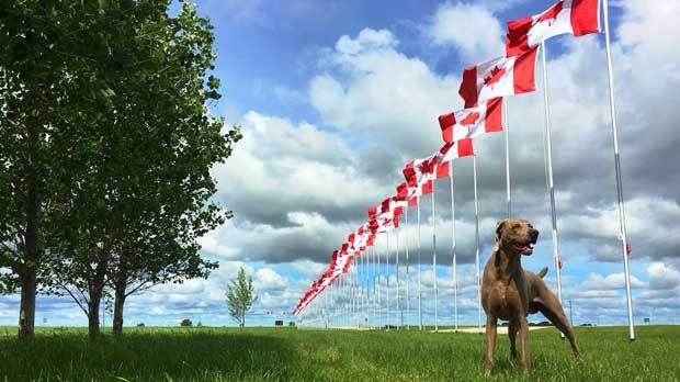 JB celebrating Canada's birthday. Photo by Patricia Payjack.