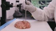New brain scanner