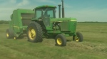 Hay yields down for some Sask. producers