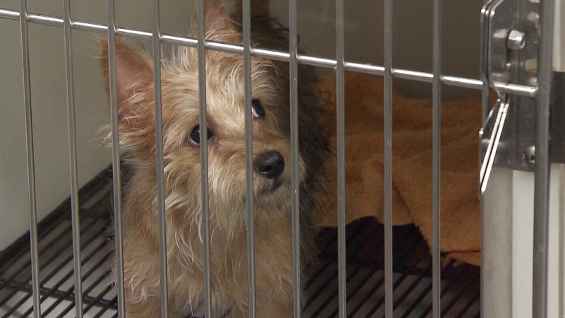 Stores can no longer sell pets, but can work with rescue societies and shelters to showcase adoptable animals.