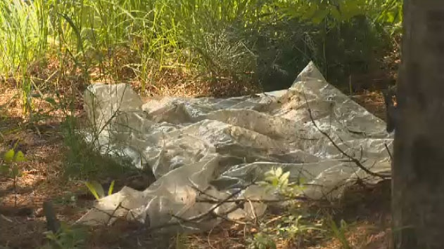 Melvin Burns says someone butchered one of his pigs on a piece of plastic near a pond on his property.