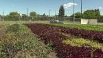 urban-farm-4
