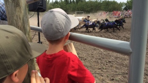 Canada Day - Heritage Park mini-chuckwagons