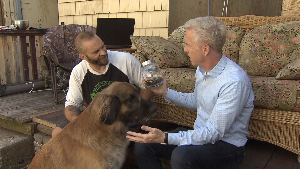 Kyle Neilsen explains how CBD therapy has helped his dog, Anna. (CTV)