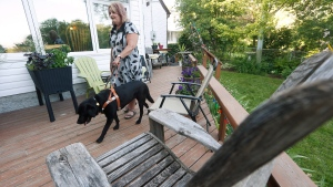 Yvonne Peters, who is visually impaired, works with her four year old service dog Mina at her home in Winnipeg, Tuesday, July 4, 2017. Peters expects proposed standards to impact service dog teams in Canada. THE CANADIAN PRESS/John Woods