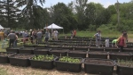 Young adults give back through urban farming