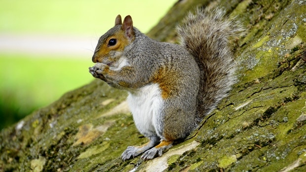 Stock photo of a squirrel. (Pexels)