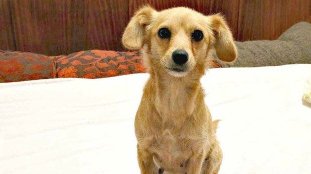 Emily, a rescue dog from Greece, escaped on June 10 after arriving at Pearson Airport.