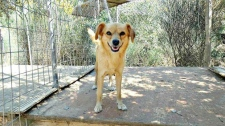 Emily, Greece, rescue dog