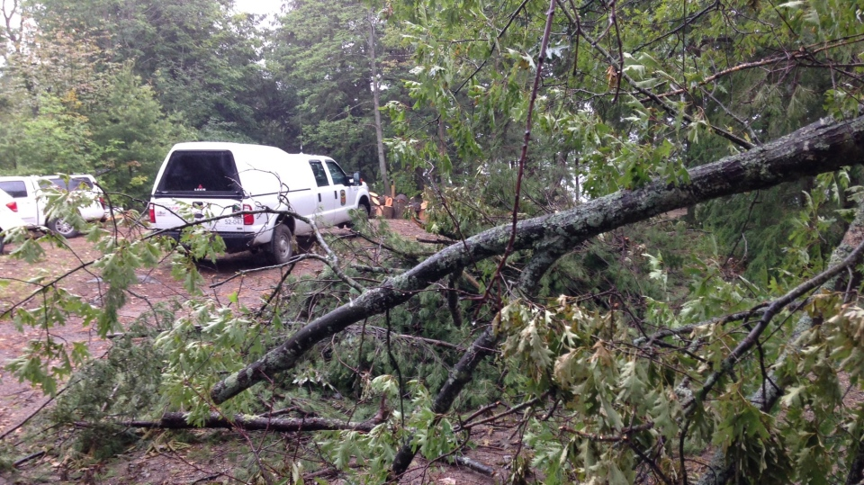 Trees were brought down at Oastler Lake Provincial Park in Seguin Township, Ont. Crews could be seen working on them Friday, July 14, 2017. (K.C. Colby/ CTV Barrie)