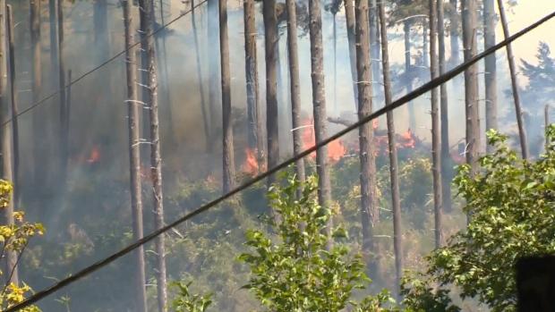 Comox brush fire