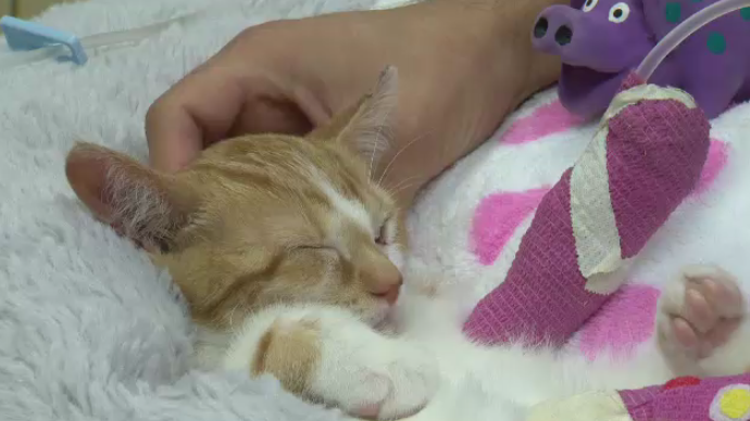 After being found injured at the side of a road, Poppy the kitten is on the mend. (July 16, 2017)
