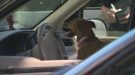 New effort to keep pets out of hot cars