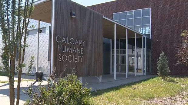 calgary, calgary humane society, animal cruelty, d