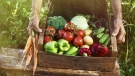 A Montreal supermarket on Wednesday began selling organic fruits and vegetables grown on its roof, a first in Canada. (valentinrussanov/Istock.com)