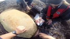 sea lion rescue tofino