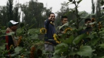 Farmer Lucio Usobiaga, founding partner of Yolcan, points to a vegetable field as he talk to chefs and restaurant employees on a floating farm known as a 'chinampa' in Xochimilco, Mexico City on July 13, 2017. (AP / Marco Ugarte)