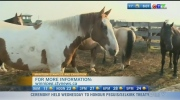 Meet the owners of the bulls and horses brought in for the Manitoba Stampede.