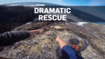 Dramatic footage shows sea lion's rescue