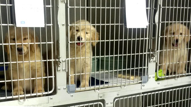 Man charged after puppy found in Toronto shopping centre trash can