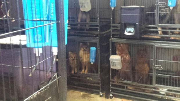 dogs, animal cruelty