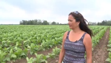 Kristine Hill says she has been ordered off land in Six Nations she leased from the Haudenosaunee Confederacy