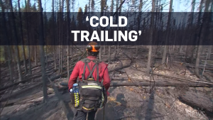 Firefighters 'cold trailing' B.C. wildfires