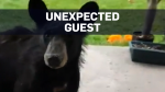 Woman opens door to find black bear cub