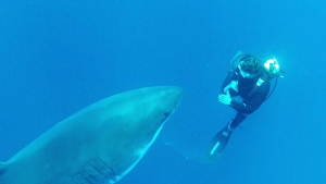 This year's Shark Week might just be the craziest