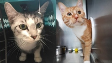 Malley is available at the Nanaimo branch, and Jay is available in Langley. (BC SPCA)