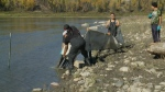 Friday marks one year since Husky oil spilled into the North Saskatchewan River, and as Allison Bamford reports, the spill is not forgotten.