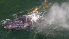 Dramatic rescue: Fishermen save humpback