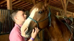 Horses infected with incurable virus