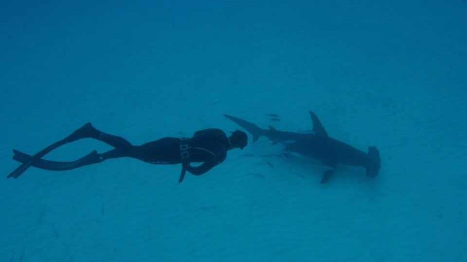 Olympic champion Michael Phelps seen racing a simulated shark during Shark Week. (Discovery Channel)