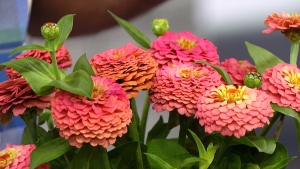 5 low maintenance plants for plant killers