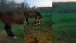 CTV Montreal: Trending: Horses