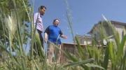 Boulevard grass