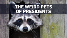 The strange history of U.S. presidential pets