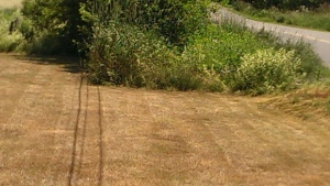 Last summer was very dry! This is what David Harris' lawn looked like last July in Nappan, NS.