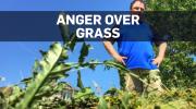 WPG grass
