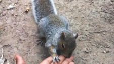 Violent squirrel on the loose in New York