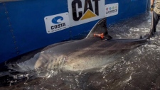 Climate change could bring sharks to Vancouver