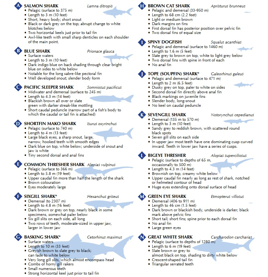 A chart from Fisheries and Oceans Canada shows the types of sharks documented off the coast of B.C.