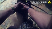 Caught on cam: Florida officer wrestles gator