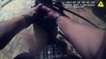 Caught on cam: Florida officer wrestles gator