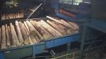 Hornepayne sawmill