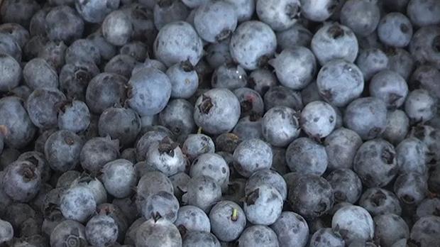 Blueberries Prices Vancouver Island