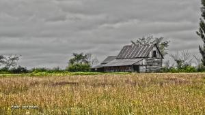 Field ready for haying in rural West Carleton. (Jody Heath/CTV Viewer )